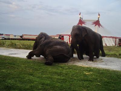 lille tegnet elefant