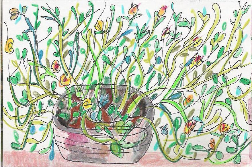 [india+flowers]