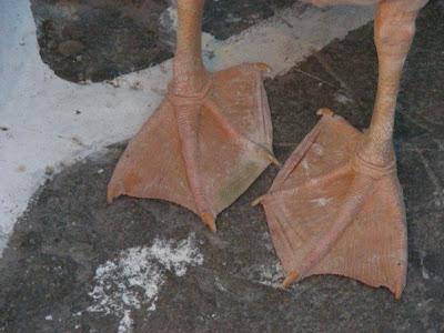 toes webbed webbed toes atlantis lol