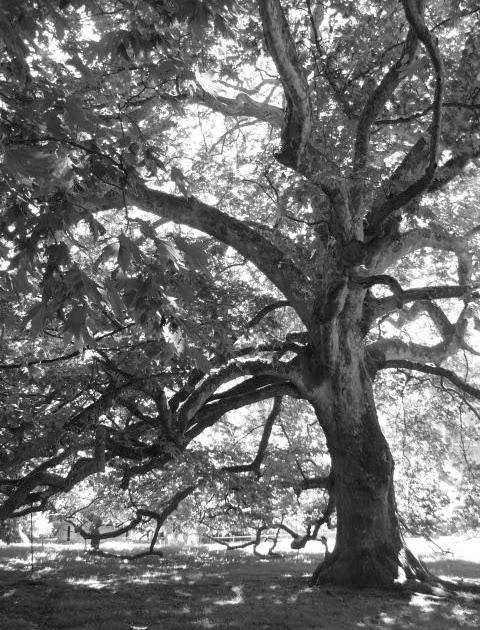 lvqa l 39 arbre cannes. Black Bedroom Furniture Sets. Home Design Ideas
