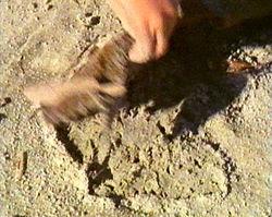 sand hoppers beneath seaweed