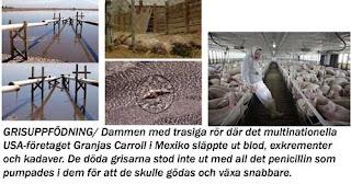 Nya fall av svininfluensan