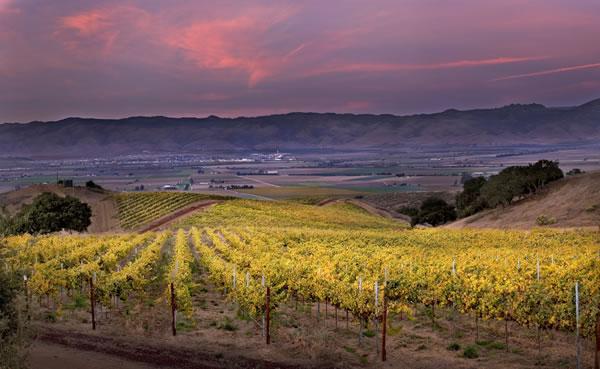 [vineyards.jpg]