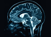 New Discoveries in neuroscience provides support for soft skill development.