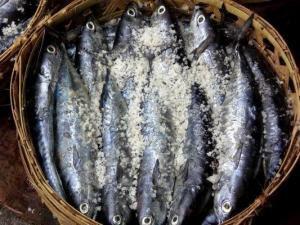 Beberapa rujukan pindang yang cukup terkenal ialah pindang pekalongan Ikan Pindang Sangat Populer
