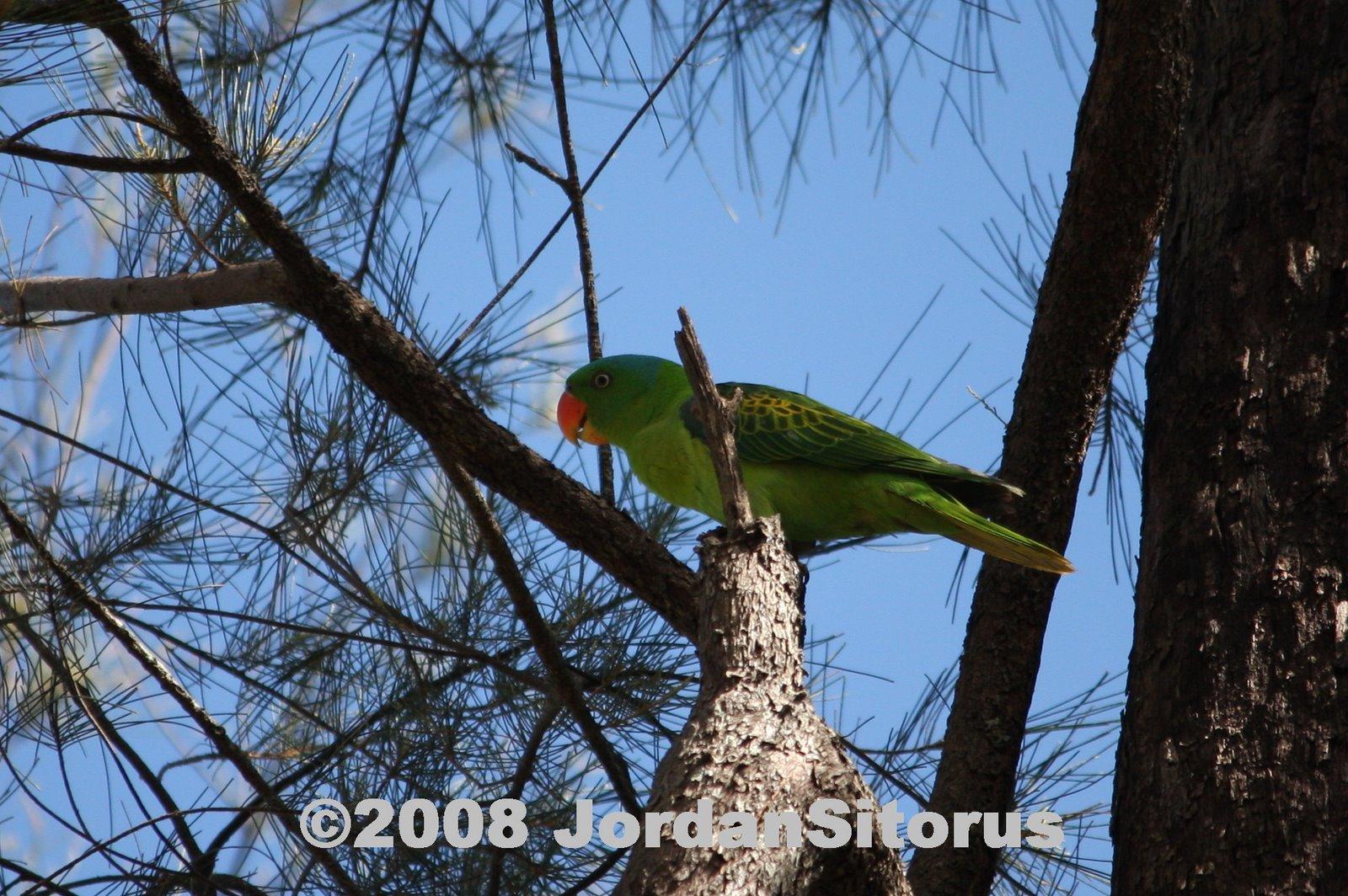 [blue-naped+parrot1.jpg]
