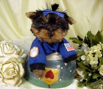 dressed up space astronaut dog