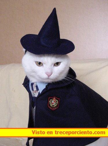 gato disfraz harry potter