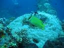 sub marine life