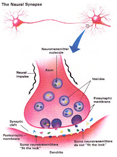 a synapse with neurotransmitters and receptors