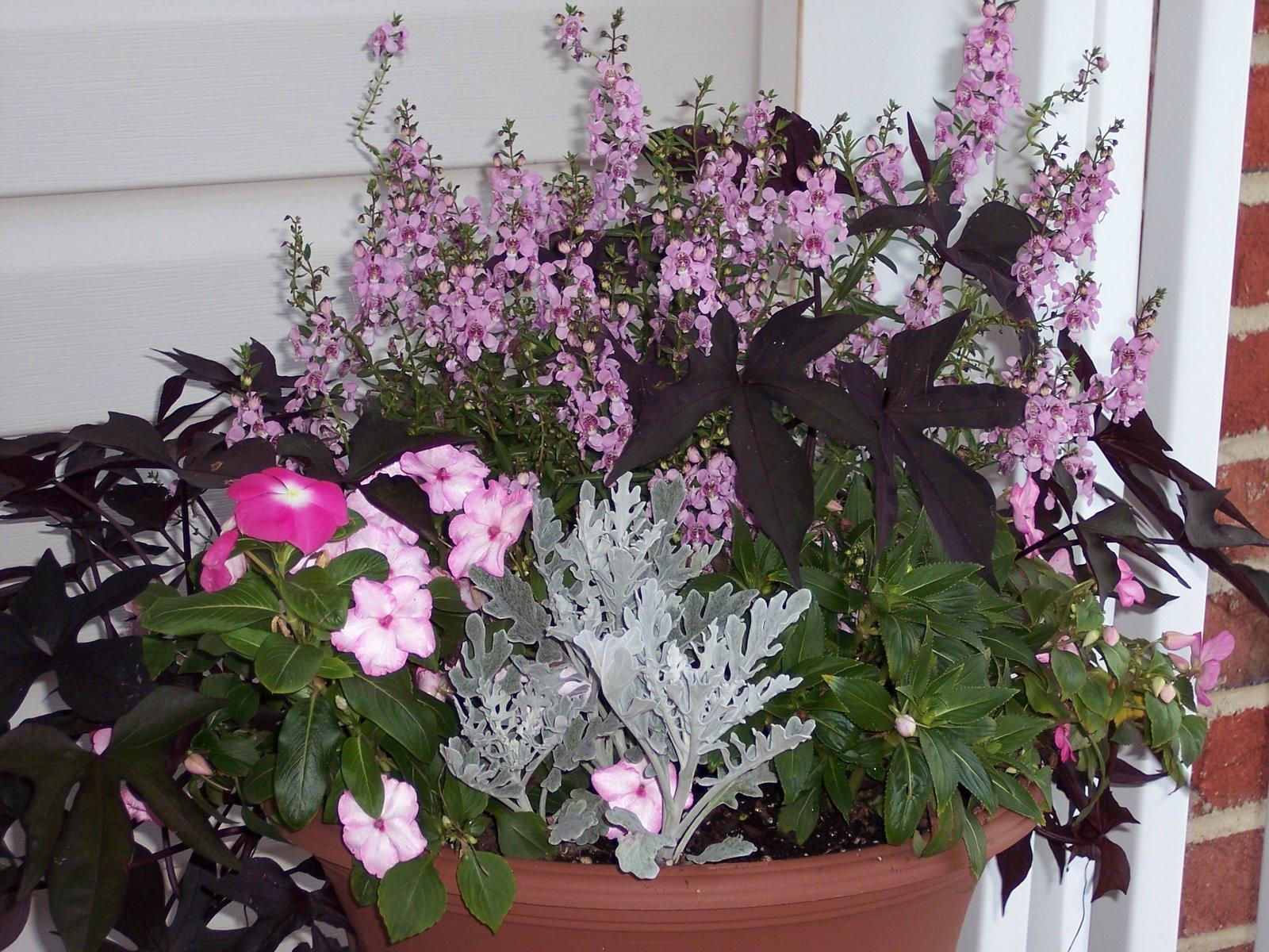 [flower+pot+7-31-07.jpg]