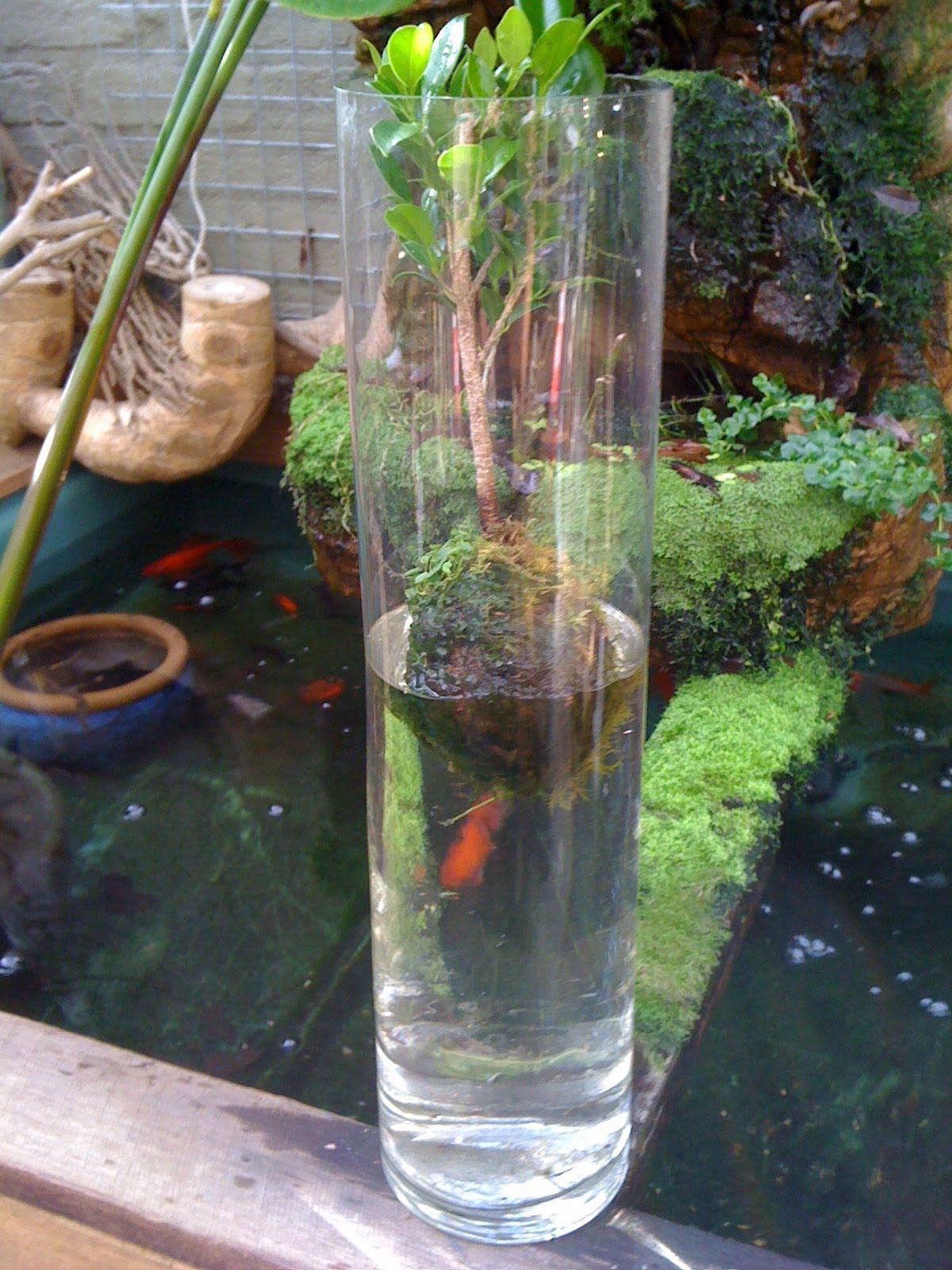 Aquadisiac News New Water Bonsai