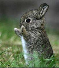 conejo-bebe