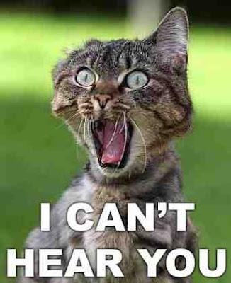 screem Cat