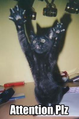http://bp1.blogger.com/_y8qhm316y84/R6jJInlBxWI/AAAAAAAAAfY/TYczMvERztw/s400/black-cat.jpg