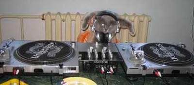 Funny Dj Cat