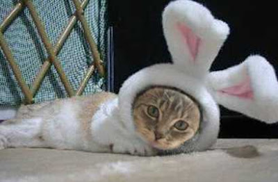 Cat vs Rabbit