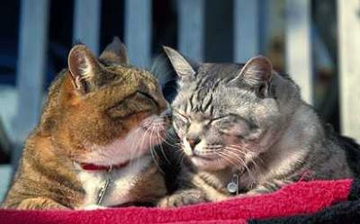 Cats gossip
