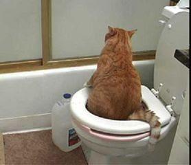 Funny Cat Litter
