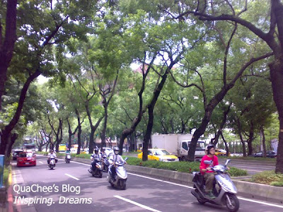 taiwan cool, taipei cool, greenery, trees