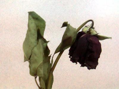 قصيدة مولد العطر موت للزهور ( للشاعرة لطيفة حساني)