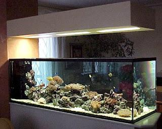 Tarta rughe febbraio 2008 for Acquario tartarughe prezzo