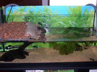 Tarta rughe novembre 2007 for Acquario esterno per tartarughe