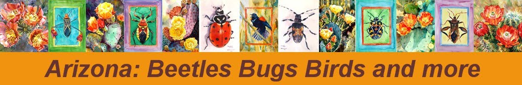 Arizona: Beetles, Bugs, Birds and more