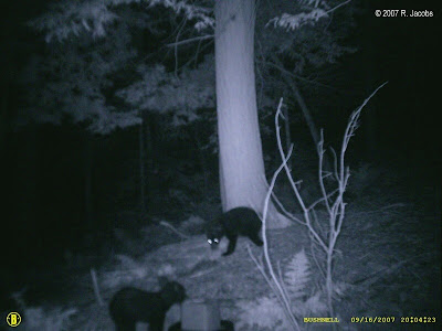 Evil glowing eyes of Bigfoot, or maybe it's just the err... effects of the night vision camera.