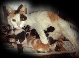 Strays  Help  Γάτα και γατάκια! fce3376c82a