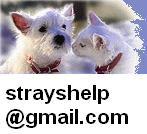 Επικοινωνία με info@strayshelp.gr & strayshelp@gmail.com