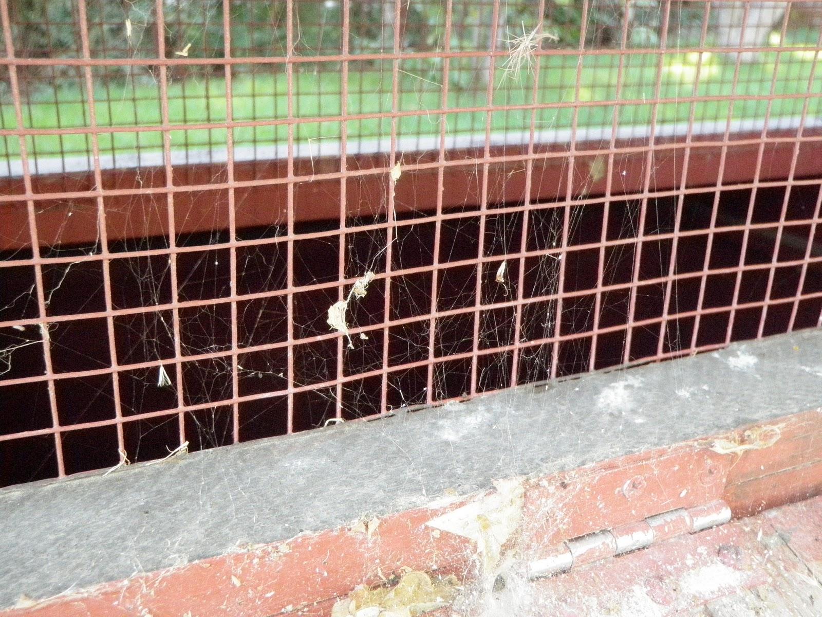 School Time Adventures Preschool Spiders