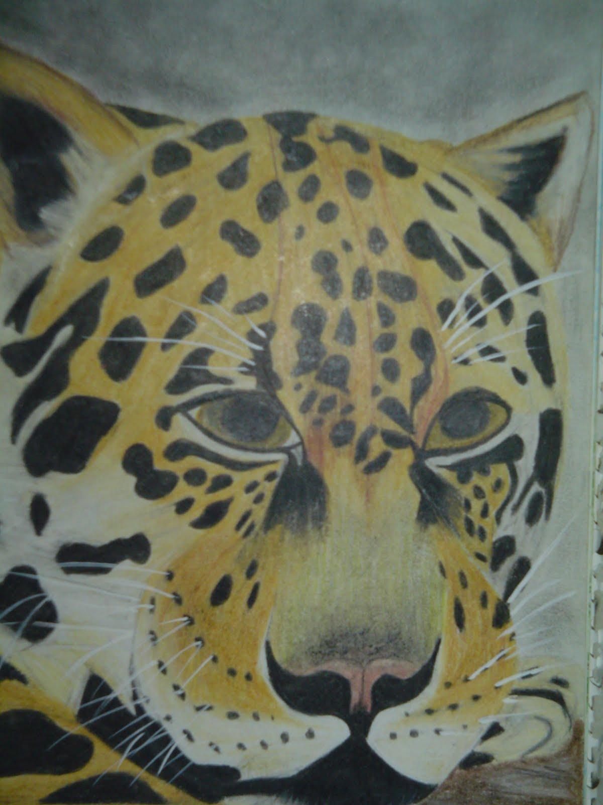 Ilda Santa Fe Desenhos De Observacao Felinos 2009