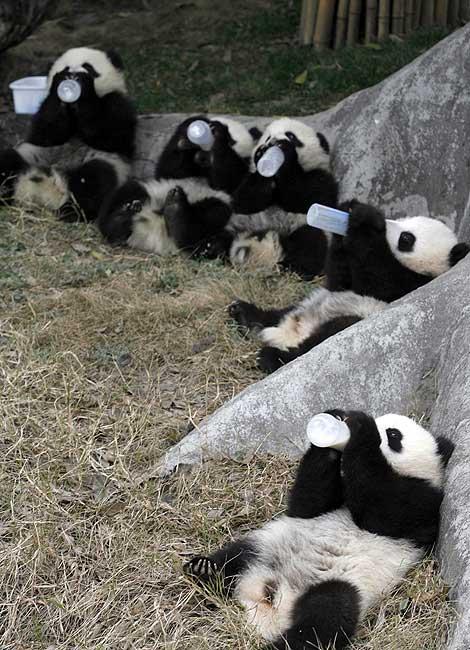 [Wolong_Giant_Panda_Centre_China_14.jpg]