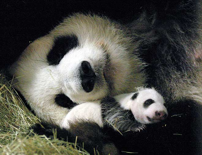 [Wolong_Giant_Panda_Centre_China_10.jpg]