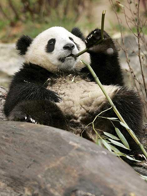 [Wolong_Giant_Panda_Centre_China_11.jpg]