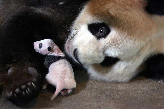 [Wolong_Giant_Panda_Centre_China_2.jpg]
