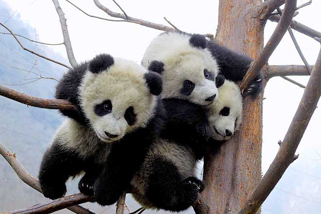 [Wolong_Giant_Panda_Centre_China_4.jpg]