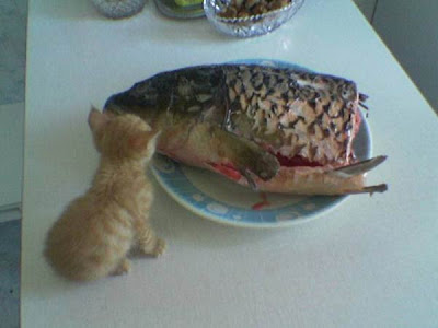 Funny cats paparazi photos funny cats paparazzi for Fish in pussy