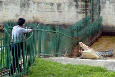 Kaohsiung municipal zoo Crocodile veterinarian