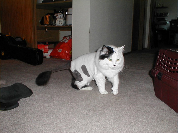 [shaved_pussy_cats_37.jpg]