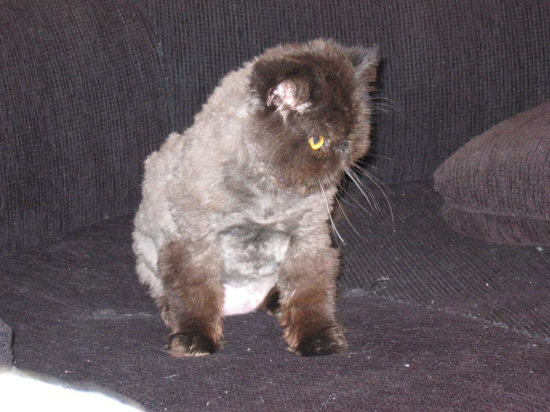 [shaved_pussy_cats_20.jpg]