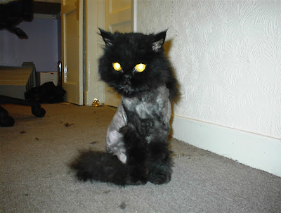 Shaved Pussy Cats