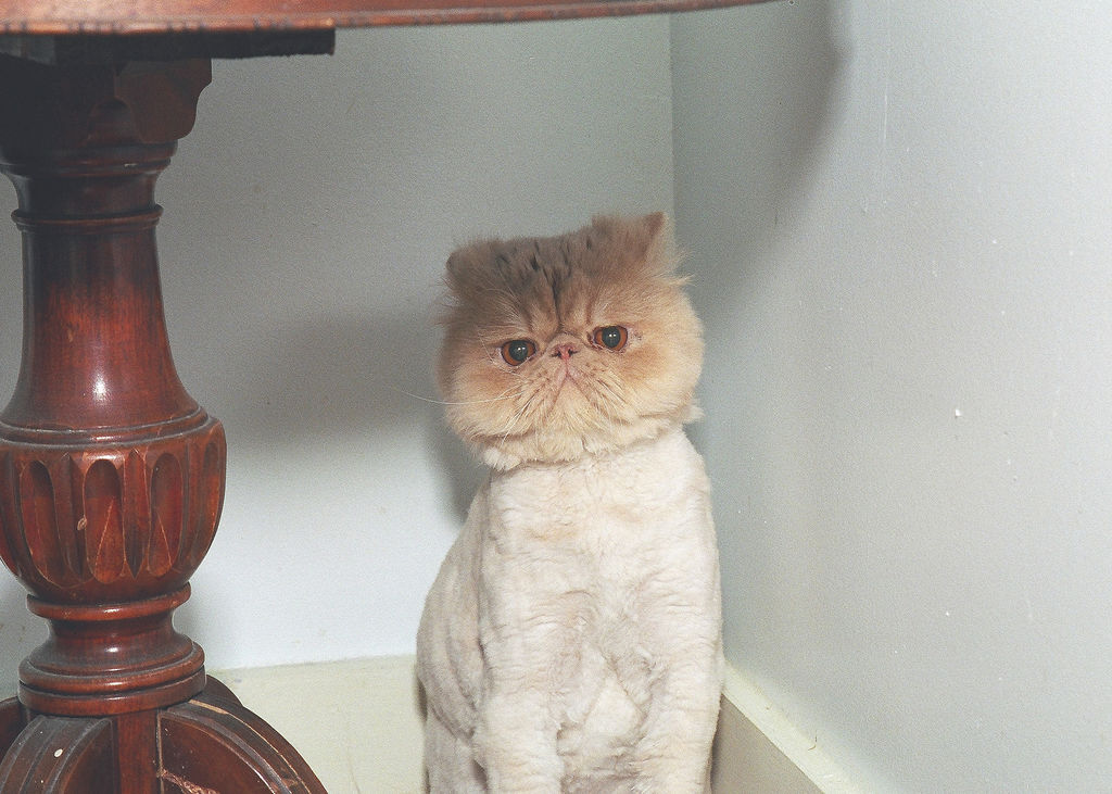 [shaved_pussy_cats_11.jpg]