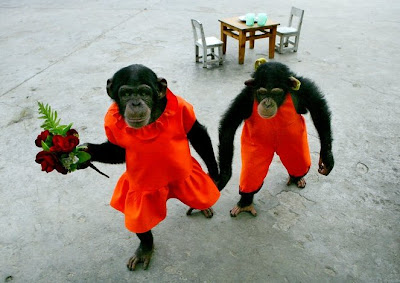 2 Young Chimpanzee in Chongqing (China)