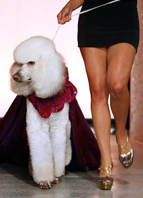 Pet Fashion Week 2007