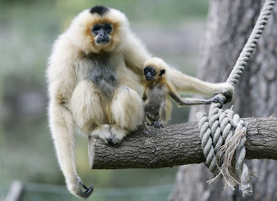 zoo and monkey
