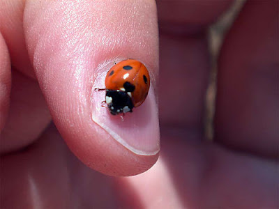 Photos of Tiny Animals In People's Hand