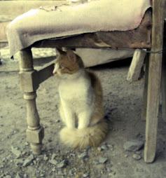 los gaticos de ambrosio