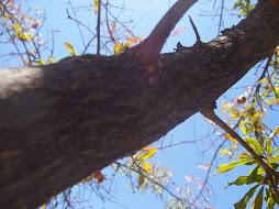 en las ramas